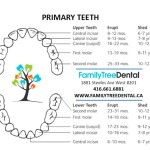 primary teeth eruption
